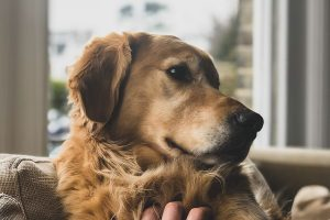 Asthma in Dogs